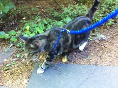 Kitty leash! (adambox) Tags: kitty philipjfry