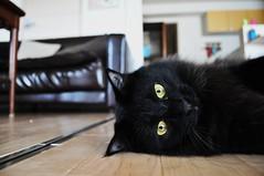 Unikko (muuuuuuuuumi) Tags: cute cat chat kitty gato kawaii katze 猫 貓 kissa ネコ かわいい 고양이 youtube