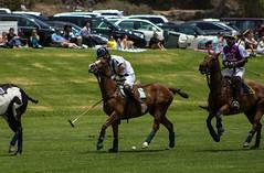 20120617 Will Rogers Polo Field (SteveWillard) Tags: california horses horse grass canon santamonica malibu ponies polo saddles pacificpalisades mallets willrogers poloponies polofield canonef75300mmf456 canon60d stevewillard willrogerspolofield