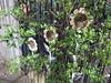 23rd March 2014 (themostinept) Tags: plants london sunflowers hackney stokenewington n16 paintedflowers stmaryscofeprimaryschool
