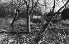 soon to be green (john grzinich) Tags: bw film wide minoltasrt101 1100 agfaapx100 underdeveloped fomadon