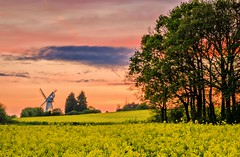 Mill view (Jez22) Tags: wood old trees sunset summer england sky copyright white color building mill windmill beautiful field weather parish yellow architecture rural skyscape landscape evening countryside wooden kent spring twilight europe colours village view sundown wind britain working sails nobody landmark historic restored smock rapeseed rotate sweeps oilseed kentish woodchurch jeremysage potd:country=gb
