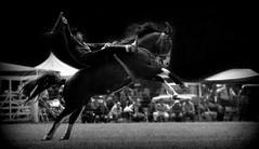 El picazo overo (Eduardo Amorim) Tags: horses horse southamerica argentina criollo caballo cheval caballos cavalos pferde herd cavalli cavallo cavalo gauchos pferd ayacucho chevaux gaucho cavall  amricadosul gacho amriquedusud provinciadebuenosaires  gachos  sudamrica suramrica amricadelsur sdamerika crioulo caballoscriollos criollos jineteada  tropillas buenosairesprovince americadelsud gineteada tropilhas tropilla crioulos cavalocrioulo americameridionale tropilha caballocriollo eduardoamorim cavaloscrioulos