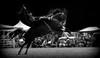 El picazo overo (Eduardo Amorim) Tags: horses horse southamerica argentina criollo caballo cheval caballos cavalos pferde herd cavalli cavallo cavalo gauchos pferd ayacucho chevaux gaucho cavall 馬 américadosul gaúcho amériquedusud provinciadebuenosaires лошадь gaúchos 马 sudamérica suramérica américadelsur südamerika crioulo caballoscriollos criollos jineteada حصان tropillas buenosairesprovince americadelsud gineteada tropilhas tropilla crioulos cavalocrioulo americameridionale tropilha caballocriollo eduardoamorim cavaloscrioulos