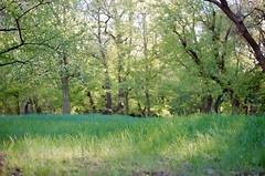 Sunshine & green (Saori_) Tags: green film rolleiflex spring czech prague praha