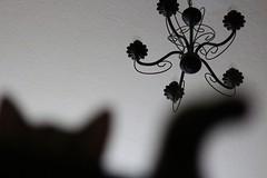 schwarzweiss68 (Ela's Zeichnungen und Fotografie) Tags: schwarzweiss schatten kater kronleuchter schattenspiel