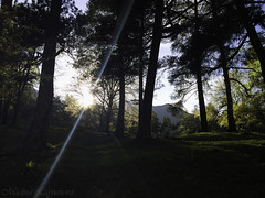 Forest life (Leona Gorden) Tags: road light shadow sun mountain plant tree green nature beauty leaves forest landscape spring high woods day view russia outdoor dusk folk stones hike foliage climbing serene rays alania foothill kchr teberda leonagorden