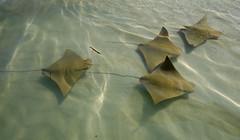 WG3_0042 (j.s. clark) Tags: beach water florida rays mexicobeach