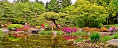 Japanese Garden (farmspeedracer) Tags: tree nature germany garden spring pond scenery may