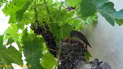 En el nido (MANULOME) Tags: nature birds nationalgeografic españa