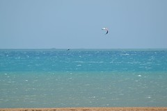 27_05_2016 (playkite) Tags: red sea kite egypt kiteboarding kitesurfing gouna vacations pleasure kiting elgouna  2016          kitelessons  kiteinhurghada