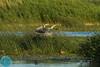 Wildlife watching trip with German guests