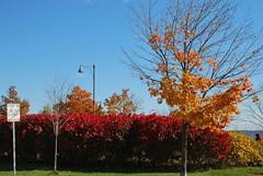 fall_270 (Sascha G Photography) Tags: autumn trees toronto color tree fall leaves leaf nikon seasons waterfront lakeshore indiansummer d60