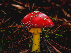 "Toadstool 2 • <a style=""font-size:0.8em;"" href=""http://www.flickr.com/photos/7605906@N04/27563629436/"" target=""_blank"">View on Flickr</a>"