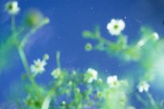 Sleepy Stars (alexwinger) Tags: morning blue sky white plant green nature night stars early cool nikon sleep space like july super bloom