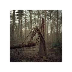 Melancholy24 (Stevesegz) Tags: winter tree film broken woodland project woods kodak melancholy portra yashica 160