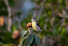 IMG_6934L4 (Sharad Medhavi) Tags: bird canonef100400mmf4556lisusm canoneod50d birdsandbeesoflakeshorehomes