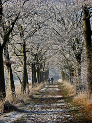 Winter Walk (Vineyards) Tags: forest sunday nederland thenetherlands romantic bos groeneveld frostymorning winterwalk baarn revisit