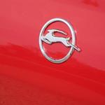 Impala Herd thumbnail