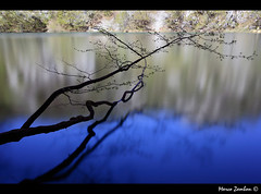 (bon__007) Tags: lake reflection water lago branch croatia acqua ramo croazia hrvatska plitvice riflesso plitvikajezera plitvickajezera parconaturaleplitvikajezera plitvikajezeranaturalpark