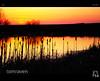 Bullrushes (tomraven) Tags: sunset reflections scotland pond dusk alves bullrushes fbdg tomraven aravenimage q22010 flickrstruereflection1 flickrstruereflection3 flickrstruereflection4 q22012