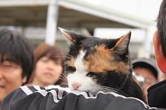 タマ駅長 (柏翰 / ポーハン / POHAN) Tags: japan cat 日本 猫 kansai wakayama 関西 和歌山 stationmaster 駅長