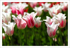 Springtime In The Park (szefi) Tags: park flowers nature sunshine canon garden spring sweden stockholm blossoms vegetation sverige botanicalgarden bergianska canoneos60d bergianskaspring02