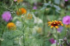 English country garden (loobyloo55) Tags: flower nature canon flora floraandfauna canoneos400d earthnaturelife