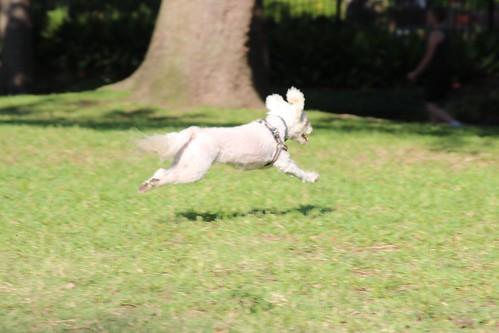 Ratapoo Dog