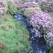 Loughglenbridge Stream