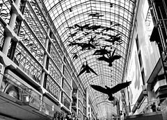 eaton centre (bw) (Mr.  Mark) Tags: city deleteme5 deleteme8 urban toronto deleteme deleteme2 deleteme3 deleteme4 deleteme6 deleteme9 deleteme7 window glass modern mall geese photo downtown artist saveme saveme2 saveme3 deleteme10 flock shoppingcentre goose eatoncentre michaelsnow flickrchallengegroup markboucher