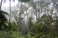 Colombian Cloud Forest - Bosque de Niebla Colombiano (CAUT) Tags: parque mist southamerica fog forest trekking nikon colombia natural hiking foggy bosque cloudforest senderismo chicaque cundinamarca naturalpark d90 américadelsur caut bosquedeniebla parquenaturalchicaque nikond90 chicaquenaturalpark
