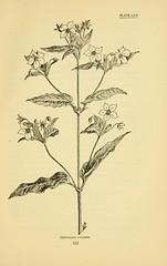 Anglų lietuvių žodynas. Žodis lysimachia ciliatum reiškia <li>lysimachia ciliatum</li> lietuviškai.
