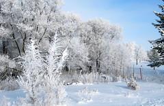 IMG_0317 (sandaxel) Tags: white heavysnow georgewythstatepark winter2010