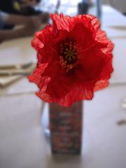 "El ""ngel"" de las amapolas (jacilluch) Tags: red flower macro fleur rojo flor blossoms rosella coquelicot papaver paperflower amapola cornpoppy papoula adormidera ababol abigfave mitxoleta flordepapel papuel qdddueaspalenciaespaa"