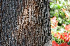 Texture (hidayat59) Tags: tree texture canon indonesia