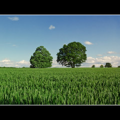 Field (Fergus Maryfield) Tags: landscape reading corn wheat fields fujifilm berkshire caversham x10 mygearandme mygearandmepremium fujifilmx10 kiedyszko