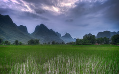 The Rice Fields of Yangshuo (Greg Annandale) Tags: china travel blue sunset mountains reflection green clouds canon workers purple rice paddy farmers guilin farm yangshuo farming grow limestone fields ricepaddies karst ricefields 1740 ricepaddy yangshou guangxi karsts canon5dmkii canon5dmk2