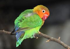 Kleiner bunter Vogel (Fotofee1900) Tags: vogel