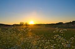 Coucher de Soleil (Denis Vandewalle) Tags: sunset sky sun sunlight flower nature fleur landscape ciel paysage coucherdesoleil pentaxk5