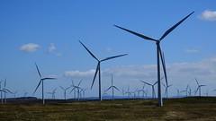 farming the winds 01 (byronv2) Tags: scotland technology glasgow engineering science electricity windfarm windpower glasgowsciencecentre renewableenergy greenenergy renewables eaglesham powergeneration scottishpower eagleshammoor whiteleewindfarm eastrefrewshire