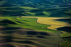 Not Gluten Free (llabe) Tags: dusk wheatfields wheat farmland steptoebutte palouse washington nikon d750