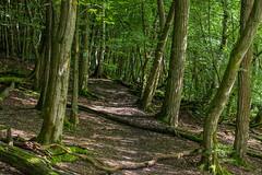 Urwaldpfad (thunderbird-72) Tags: forest germany de deutschland wald allemagne saarland saarbrcken urwald neuhaus steinbachtal nikond7100