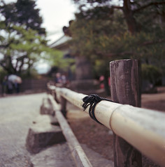 Bamboo fence (Mark Dries) Tags: slr film japan 50mm kodak wideangle distagon colournegative ektar filmphotography hasselblad500cm markguitarphoto markdries
