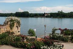 Eltville am Rhein (Thomas' Images) Tags: sunshine rose garden spring view fluss rhein rheingau eltville rhineriver sonnenschein fruehling
