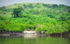 Caramoan (300) (amorey) Tags: philippines sandbar mangrove peninsula bicol filipinas caramoan camarinessur camsur sandwave surivivor caramoanislands
