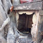 "Tree Growing Around Small Shrine <a style=""margin-left:10px; font-size:0.8em;"" href=""http://www.flickr.com/photos/14315427@N00/6930263570/"" target=""_blank"">@flickr</a>"