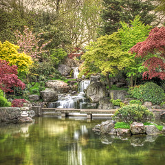 Kyoto Japanese Garden, Holland Park, London (violinconcertono3) Tags: london japanesegarden landscapes waterfall pond kyoto flickr unitedkingdom fineart cityscapes maples fineartphotography hollandpark koipond davidhenderson london2012 londonist azelias fineartphotographer londonphotographer 19sixty3 19sixty3com