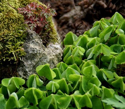 Botanischer Garten Karlsruhe öffnungszeiten: Flickriver: HEN-Magonza's Photos Tagged With Botanischergarten