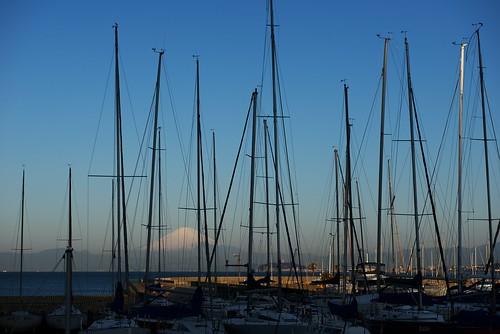 morning harbor